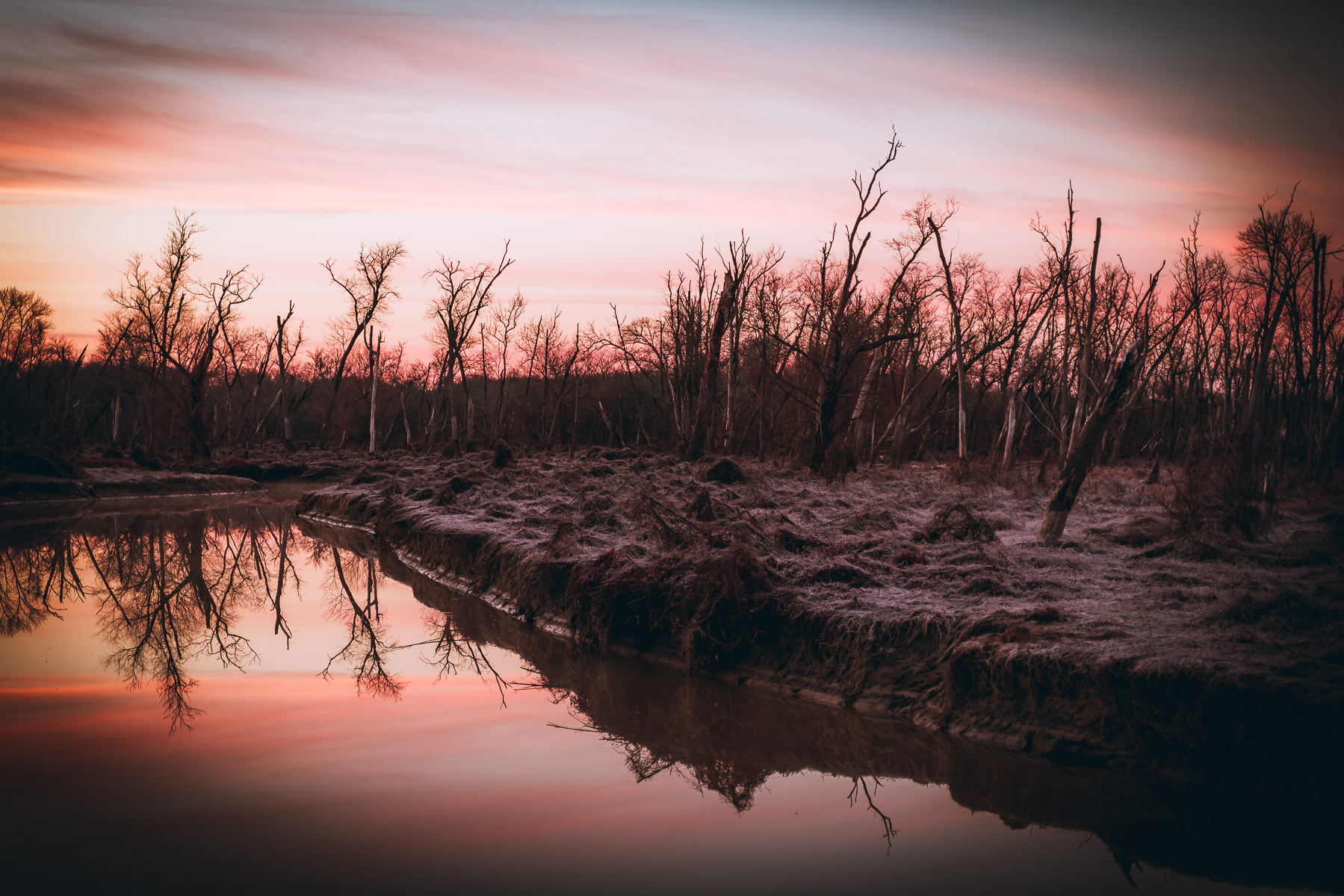 Trees greet the morning sun on a cold day at North Texas' Hagerman National Wildlife Refuge.