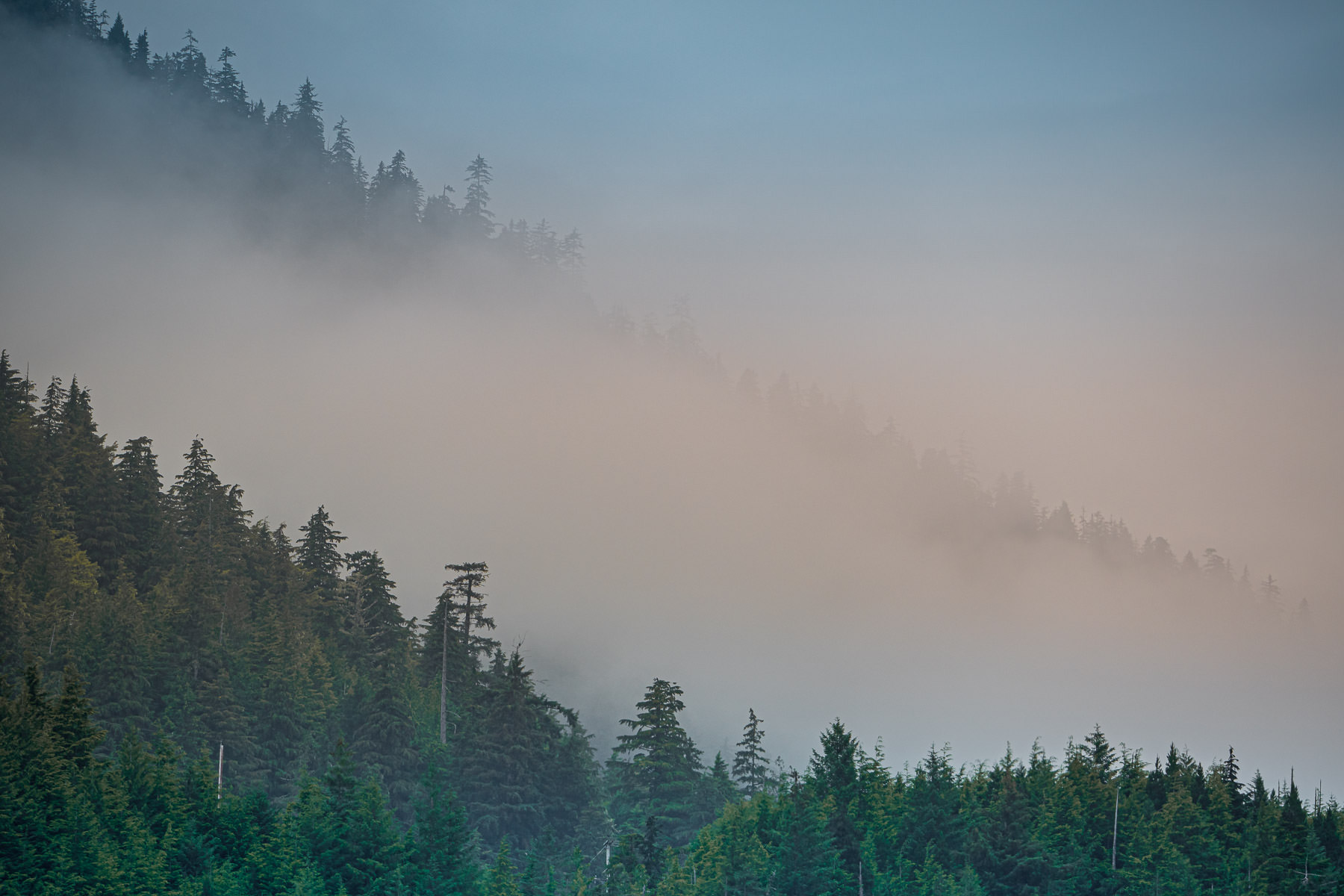 Early-morning fog among mountainside trees in Ketchikan, Alaska.
