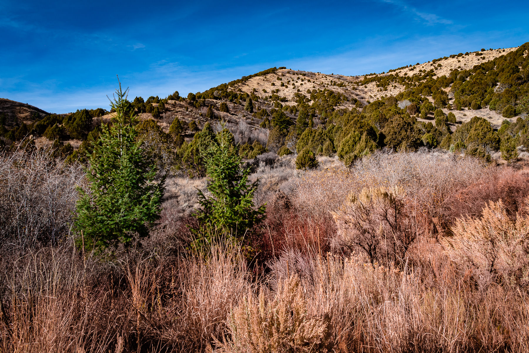 The hilly landscape of Cherry Springs Nature Area near Pocatello, Idaho.