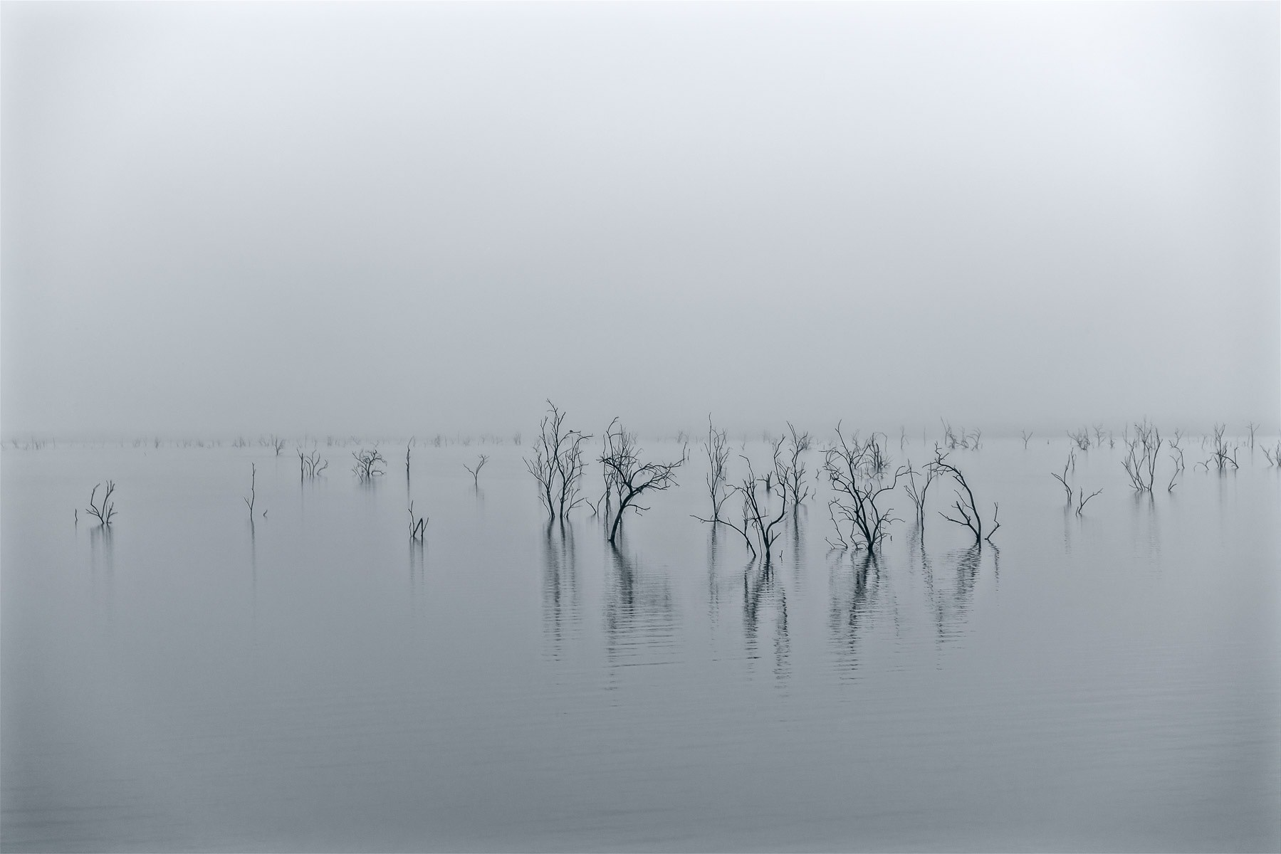 Trees reach out of North Texas' Lake Lavon on a foggy, overcast morning.