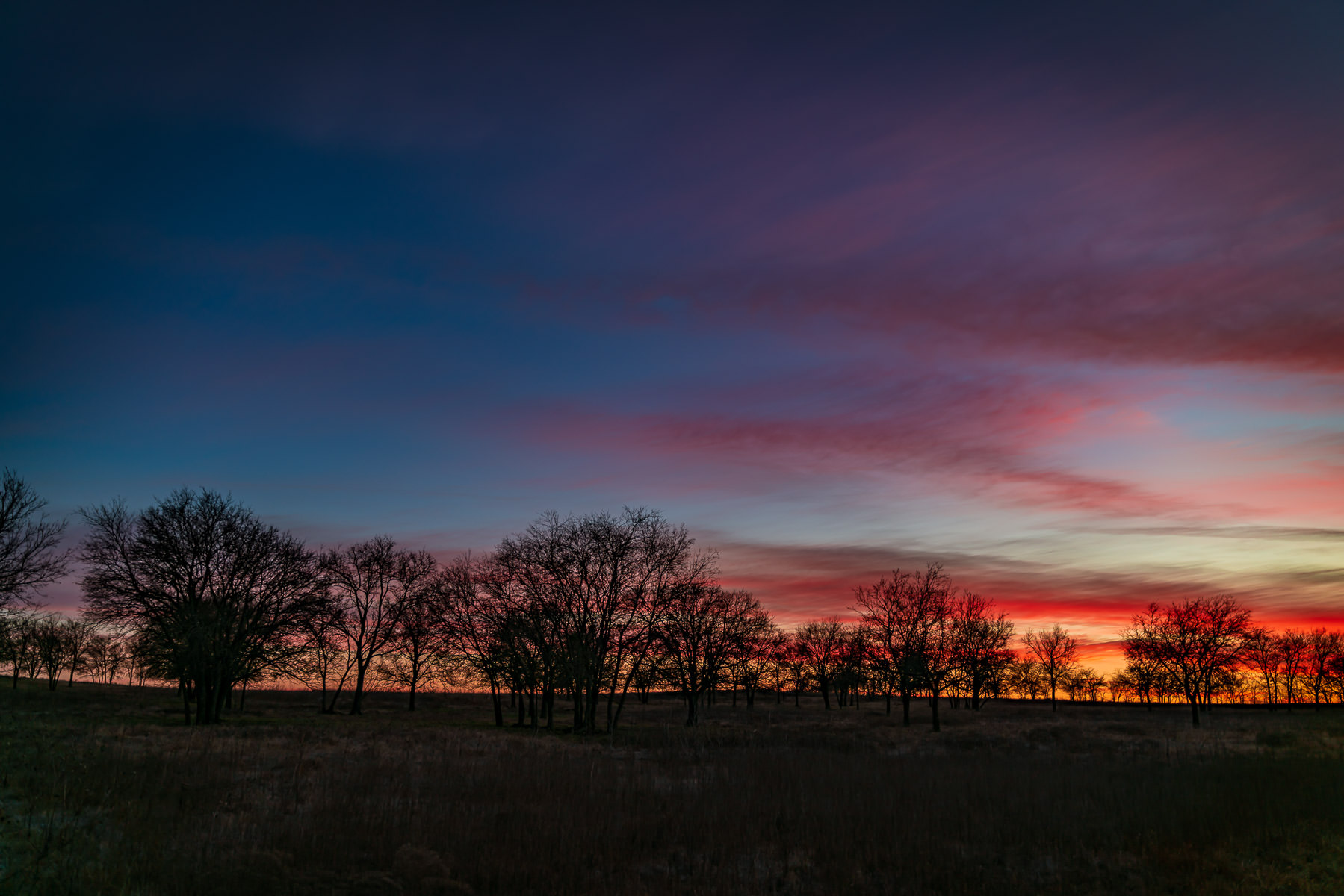 The sun rises on a field of trees near Pottsboro, Texas.