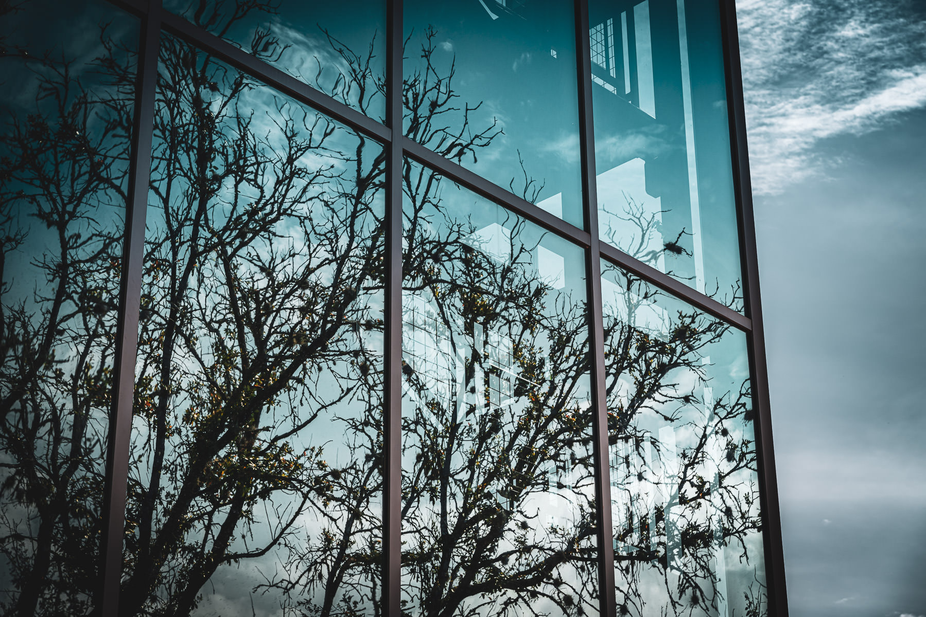 Trees reflect in windows at Kiest Hall, Texas A&M University.