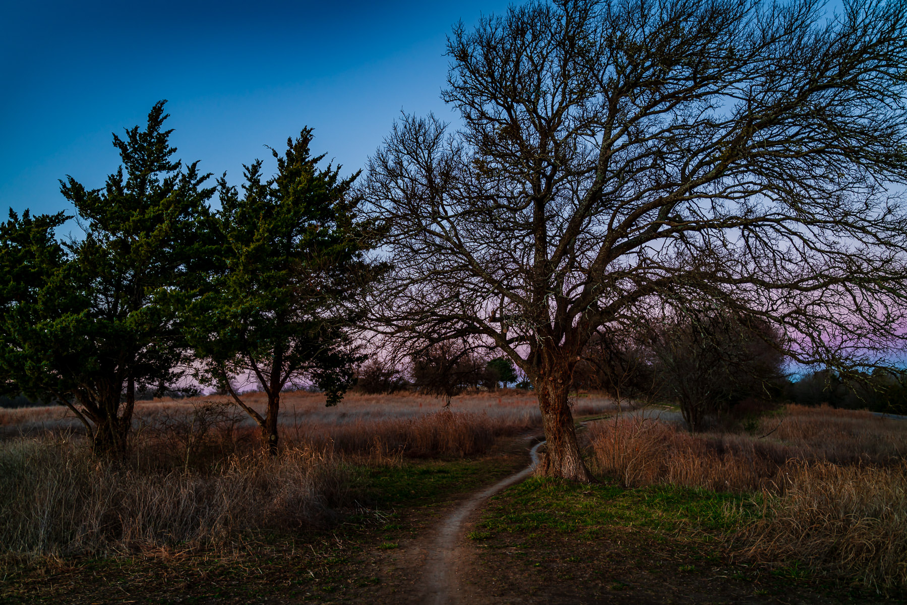 A path carves between trees at McKinney, Texas' Erwin Park.