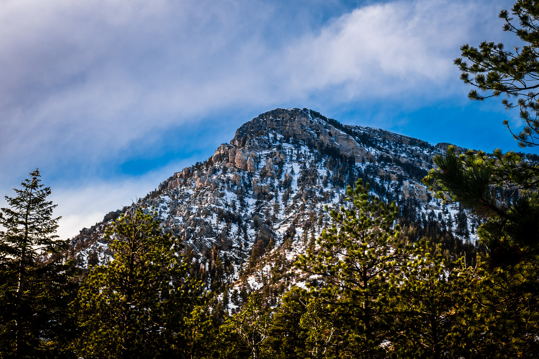 Nevada's Mount Charleston looms over the surrounding forest.