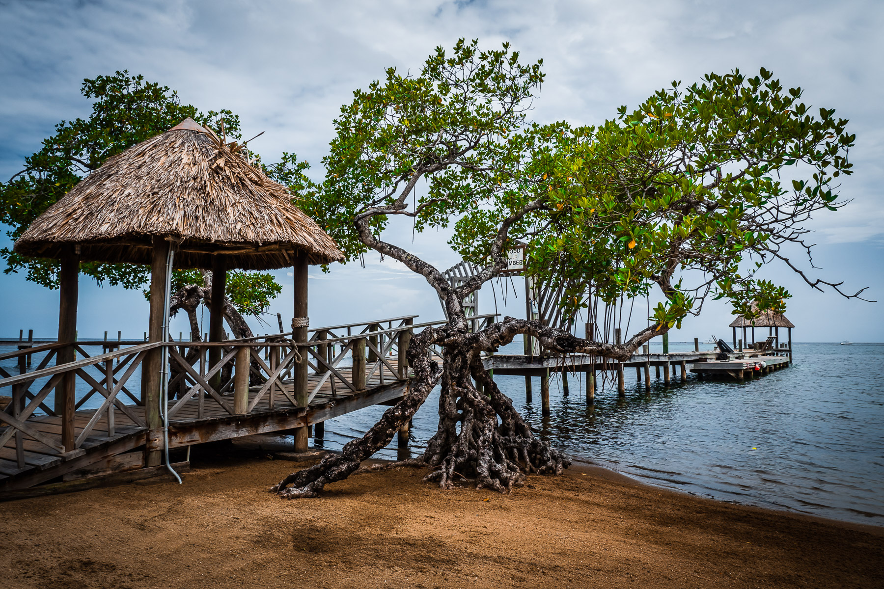 Mangrove trees grow alongside a pier on a Roatan, Honduras, beach.