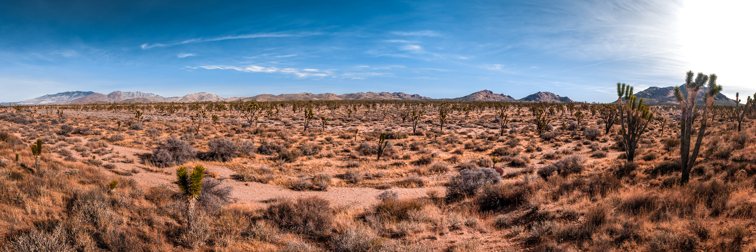 The arid desert landscape of California's Mojave National Preserve stretches into the distance.