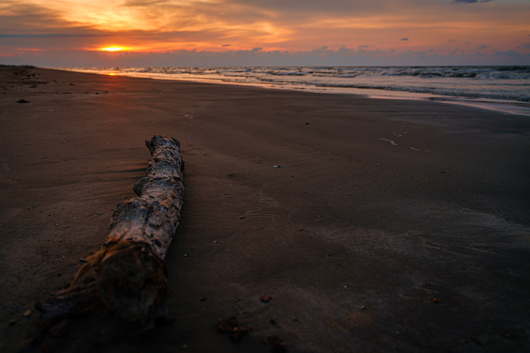 Driftwood greets the morning sun on a Galveston, Texas, beach.