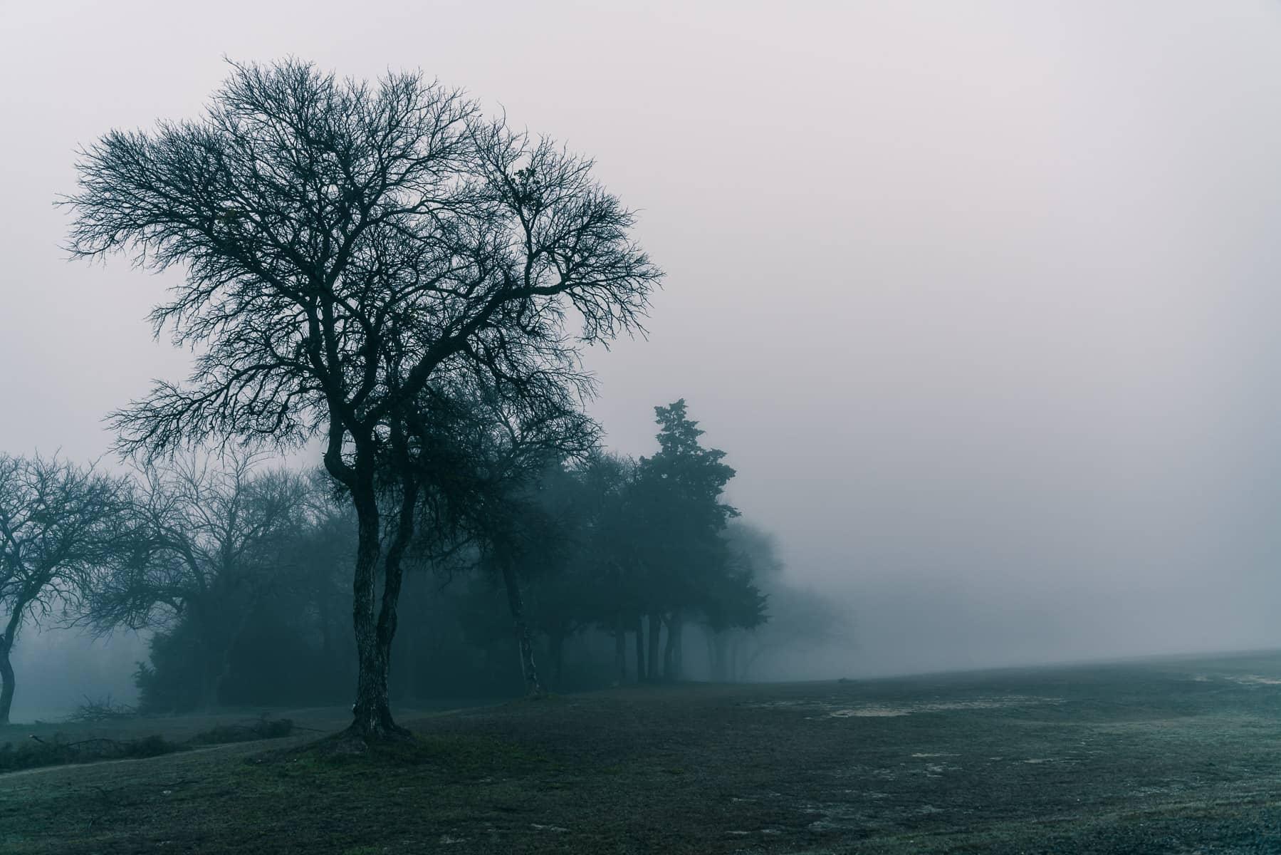 A foggy morning at McKinney, Texas' Erwin Park.