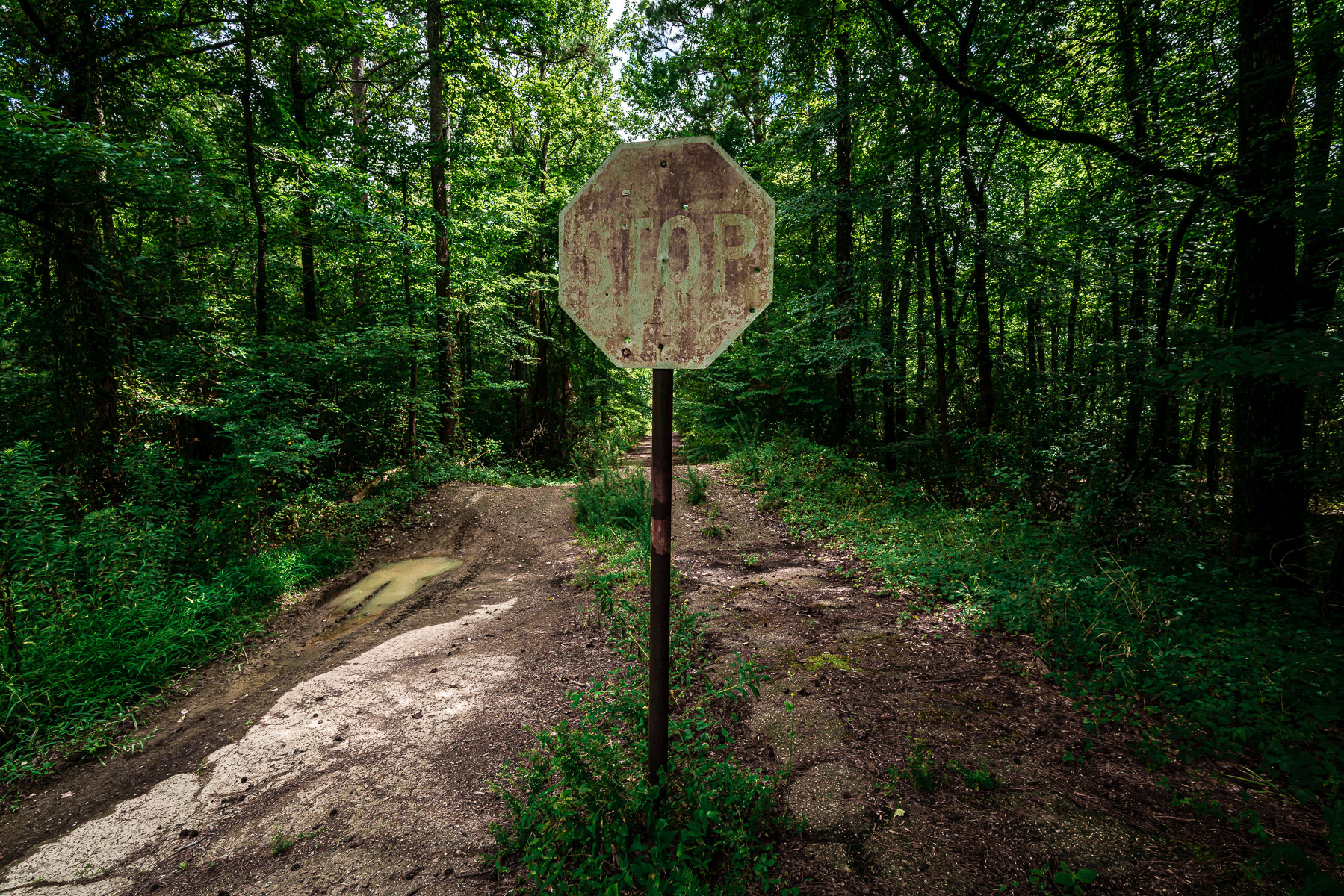 A forgotten stop sign in the forest at Arkansas' Star of the West Public Use Area along the shore of Lake Greeson.