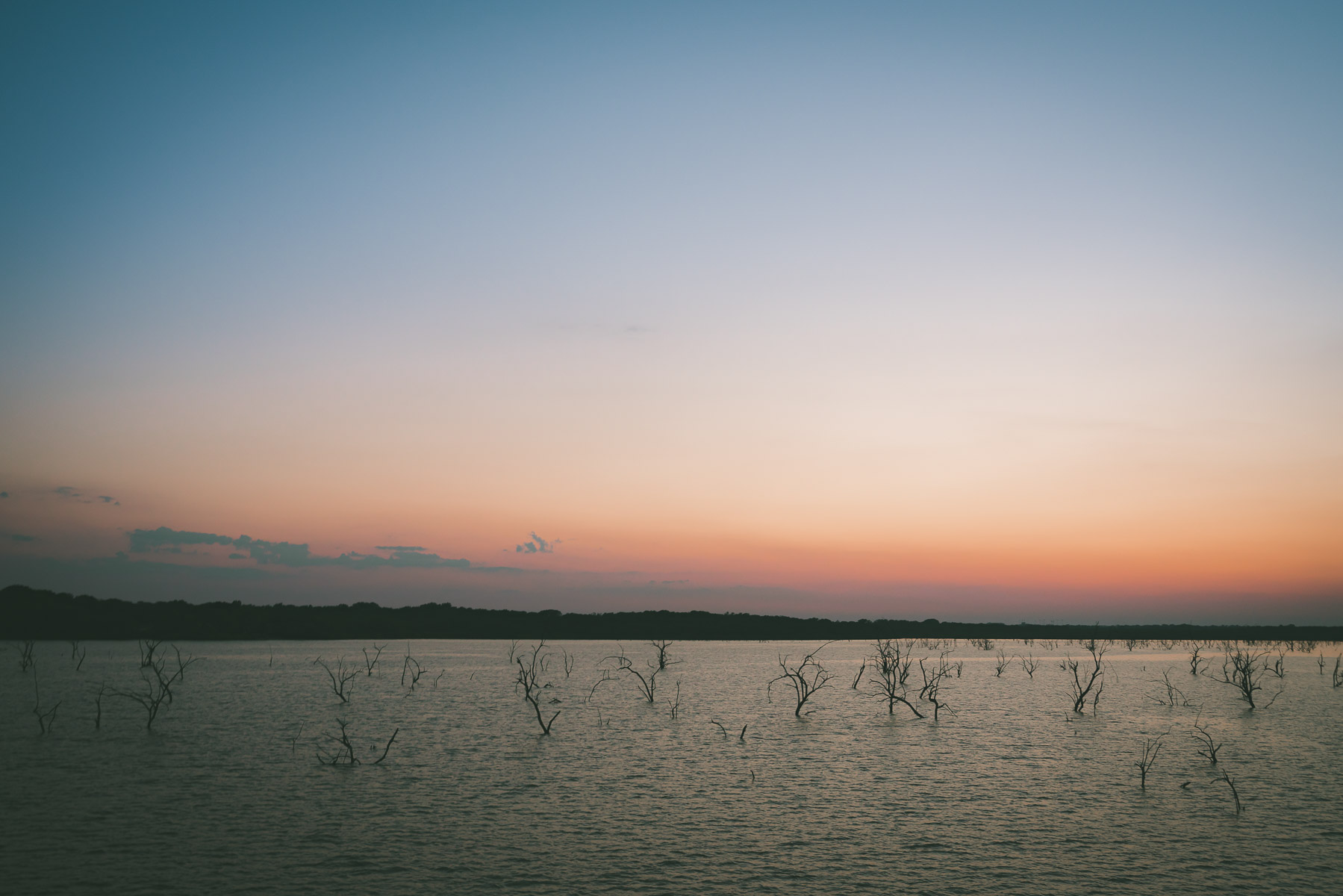 Trees—remnants from the 1953 impoundment of North Texas' Lake Lavon—poke from the water into the evening sky near the town of Princeton.