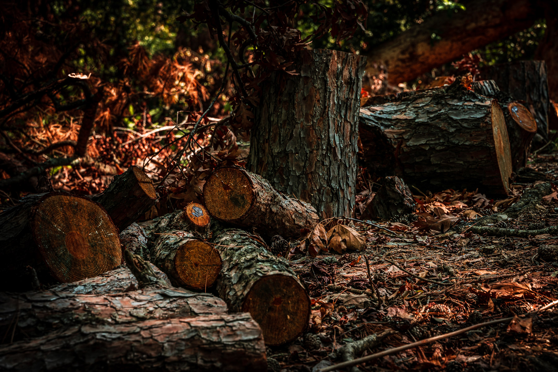 Remnants of a felled tree at East Texas' Lake Bob Sandlin State Park.