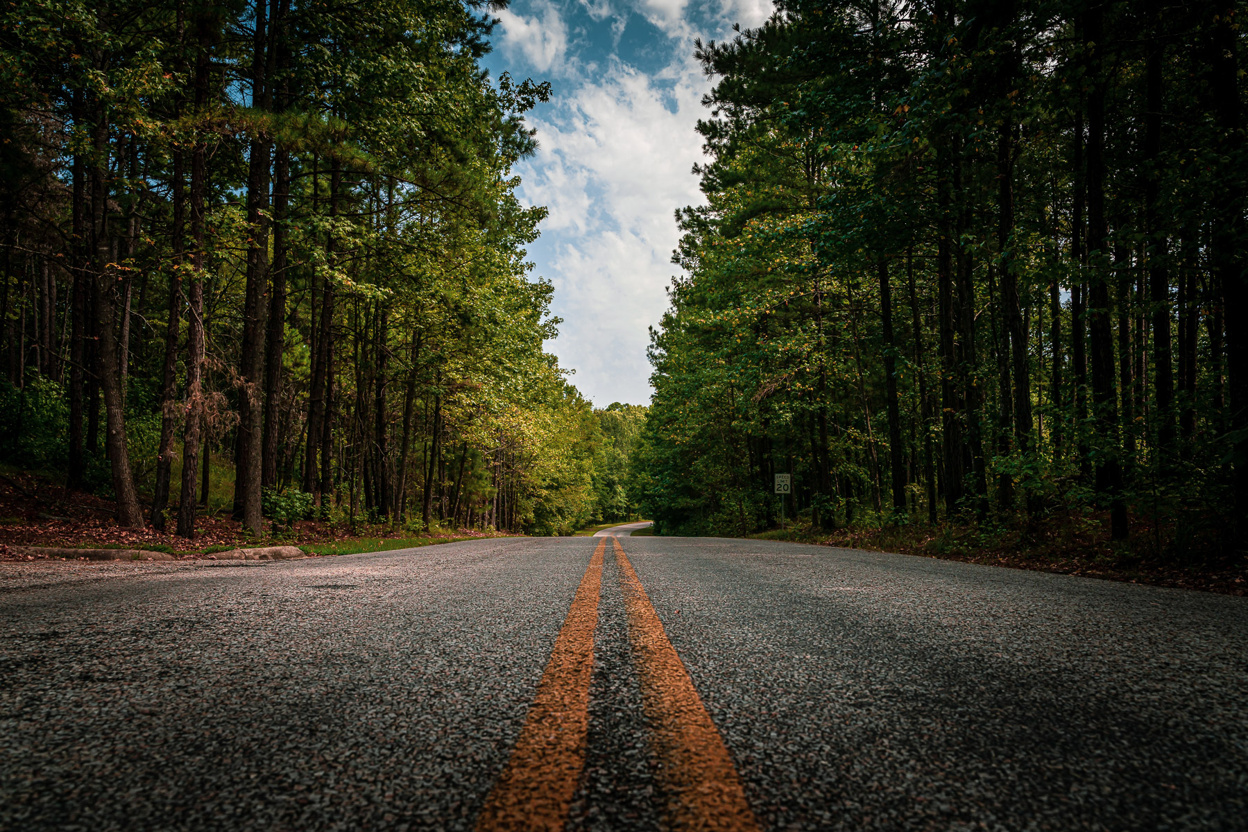 A road through the piney forest of East Texas' Lake Bob Sandlin State Park.