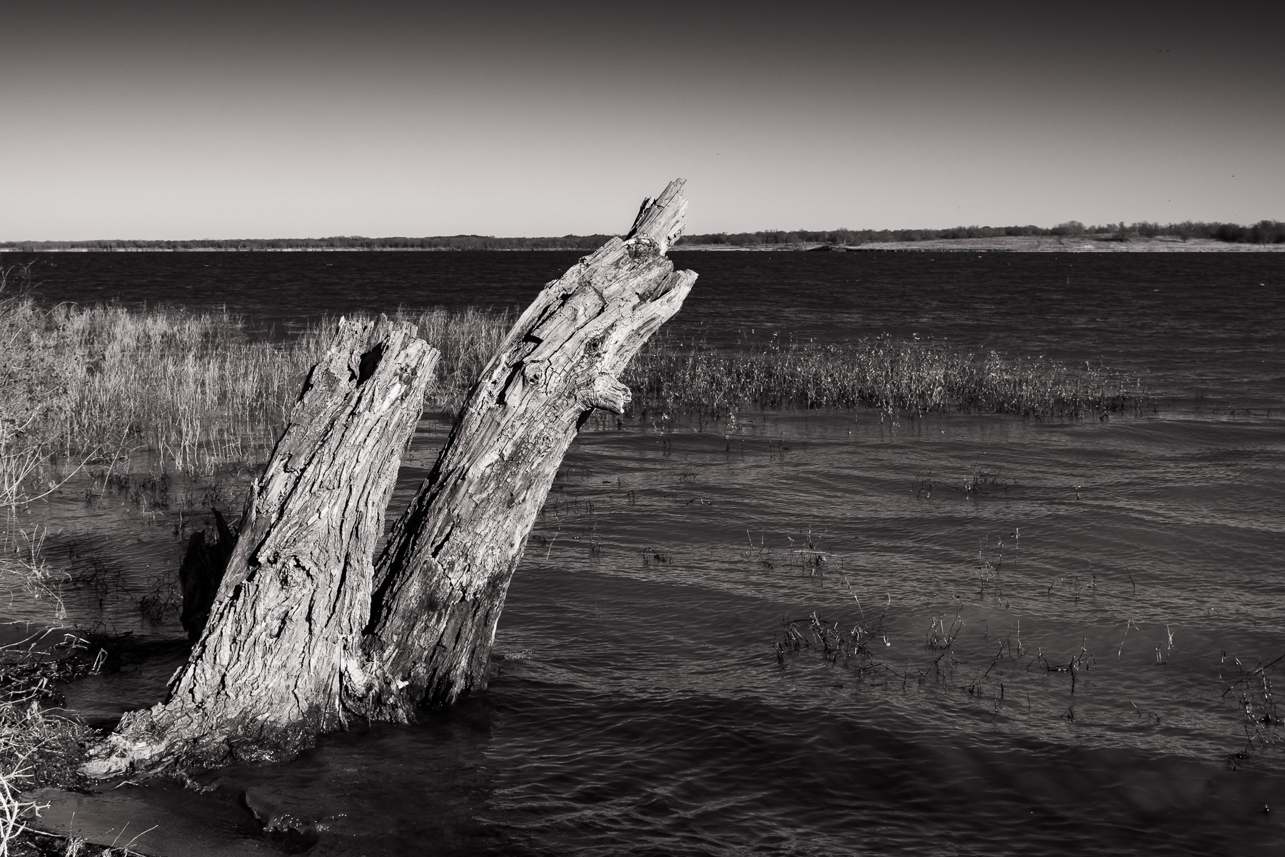 A tree stump emerges from the waters of the Big Mineral Arm of Lake Texoma at the Hagerman National Wildlife Refuge, Texas.