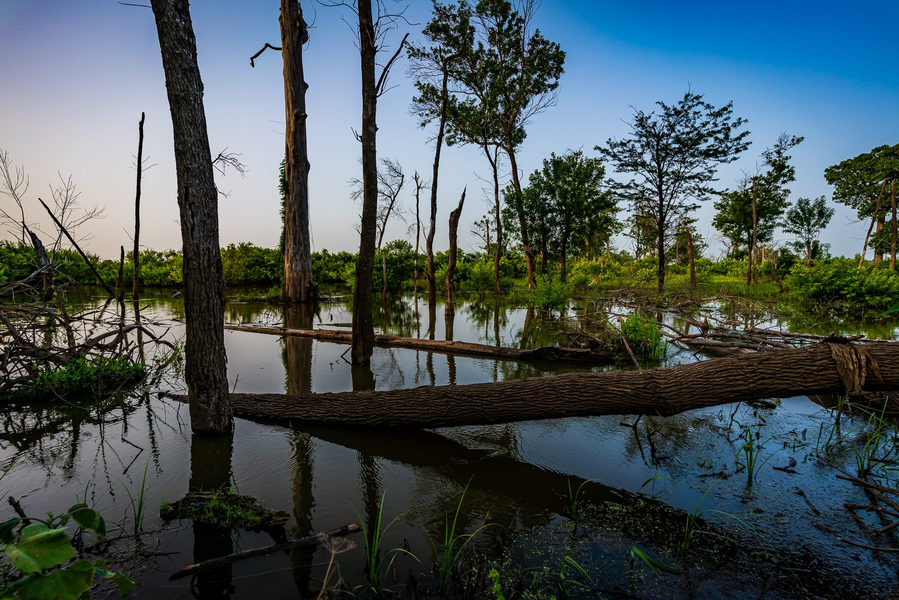 Inundated trees at North Texas' Hagerman National Wildlife Refuge.