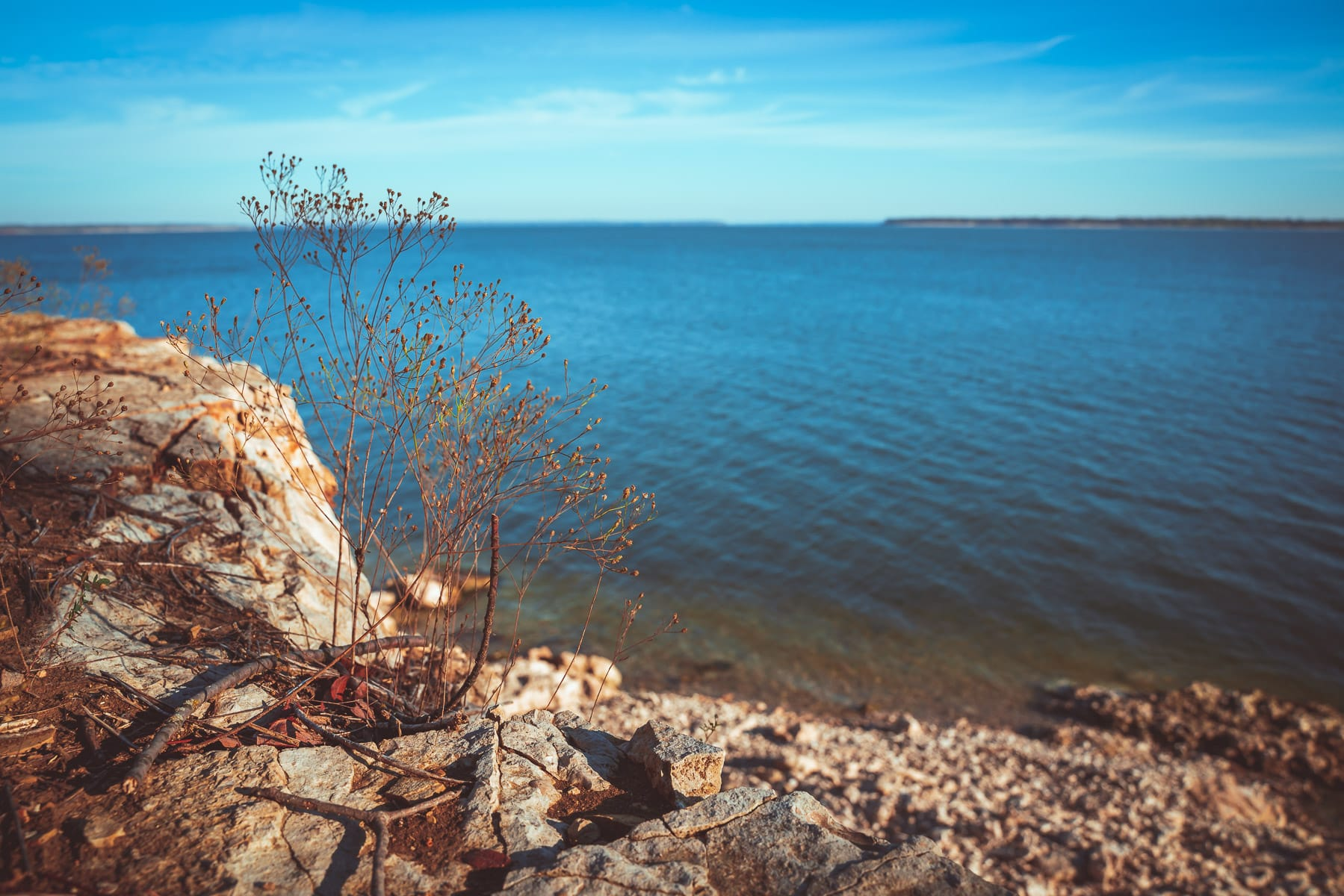 A plant grows on a cliff overlooking Lake Texoma at Eisenhower State Park, Texas.