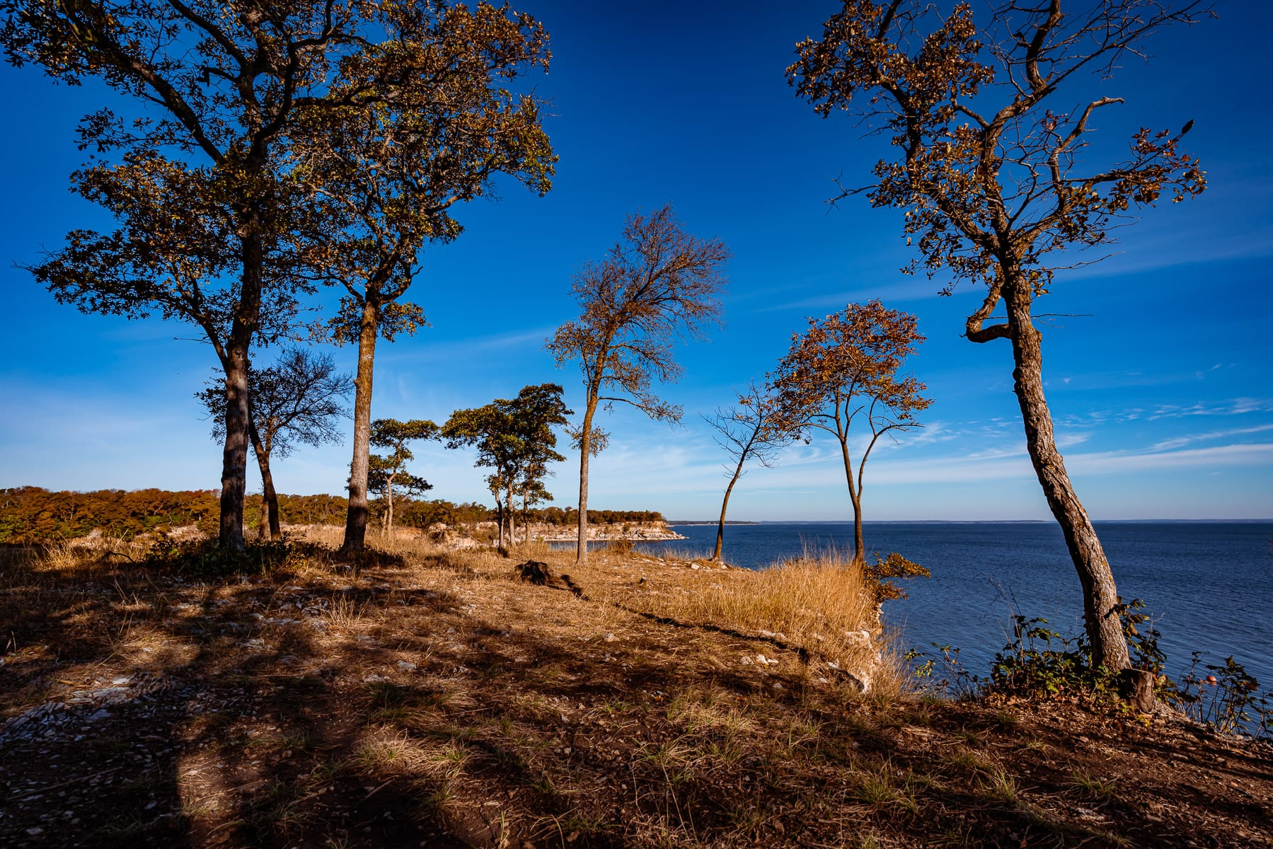 Trees on a bluff along the shore of Lake Texoma at Eisenhower State Park, Texas.