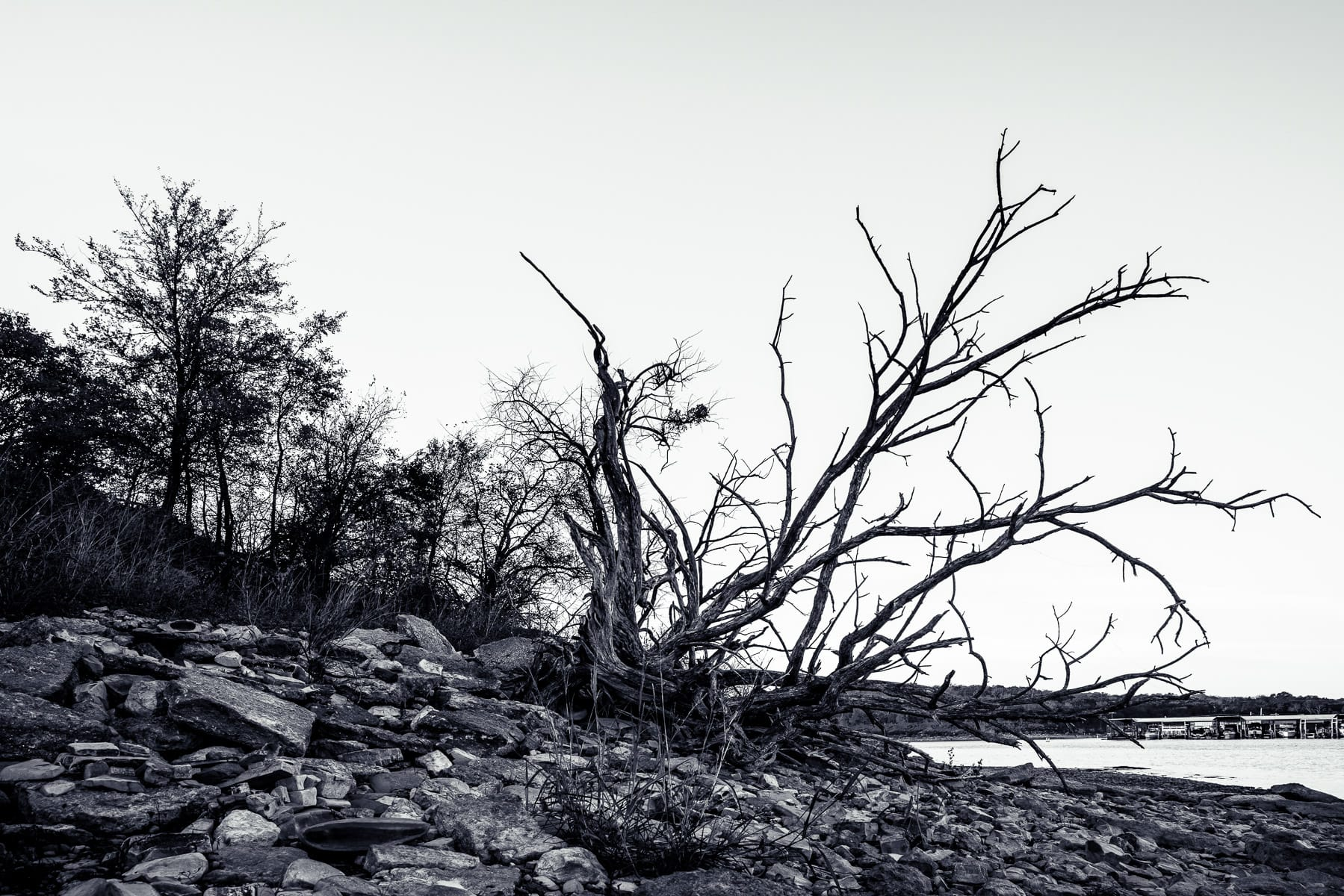 A barren tree on a rocky beach at North Texas' Eisenhower State Park.