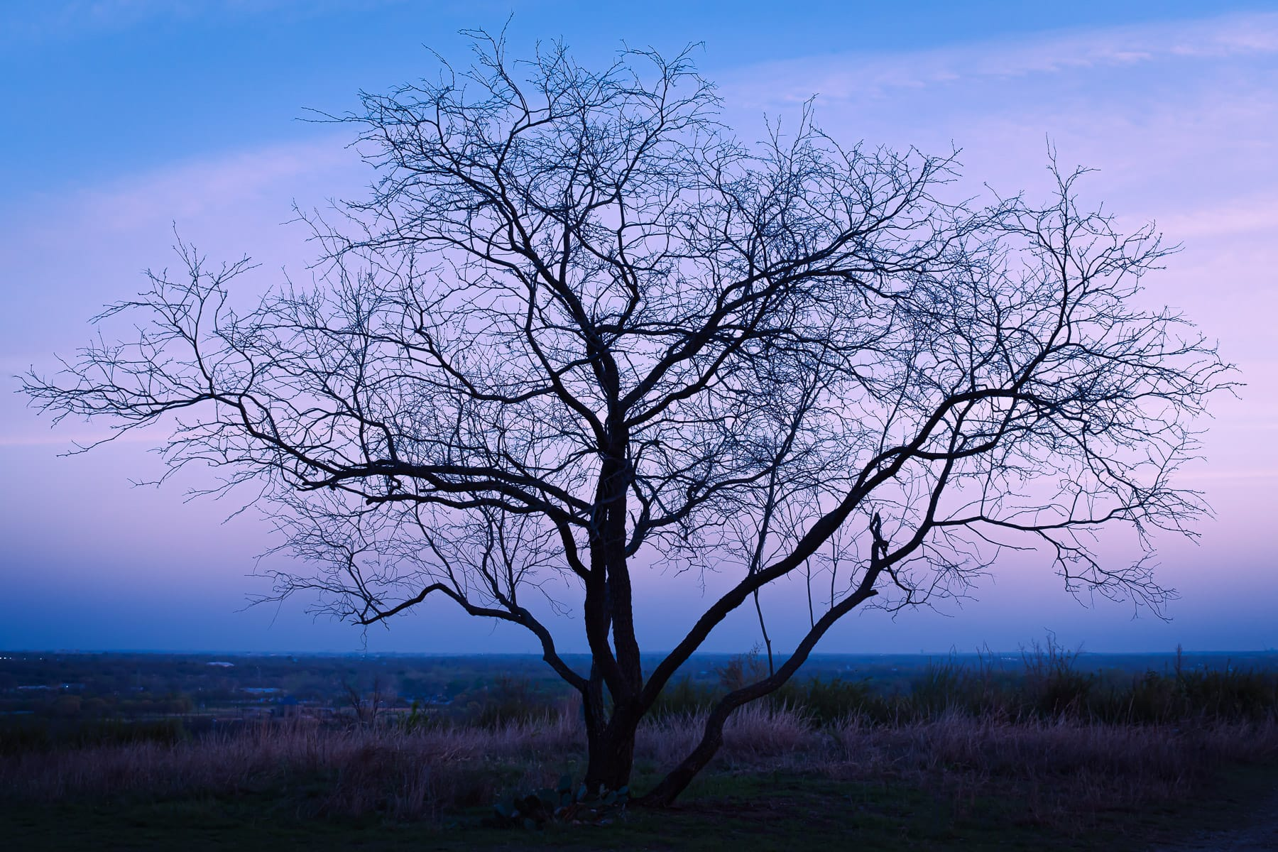 A tree at Tandy Hills Natural Area in Fort Worth, Texas, is silhouetted by the first light of dawn.