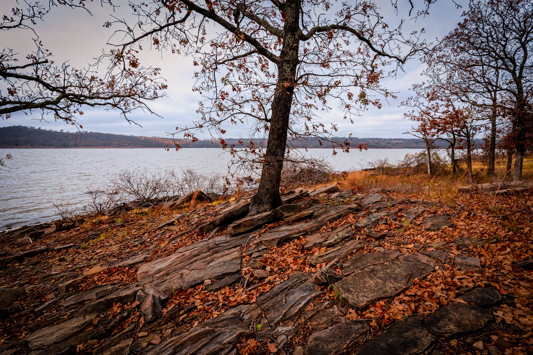 Trees along the rocky shore of Oklahoma's Lake Eufaula at Arrowhead State Park.