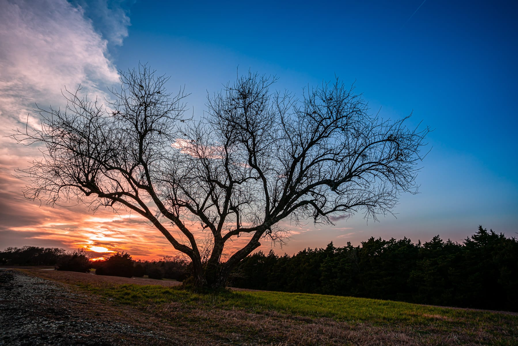 The sun sets on a tree at McKinney, Texas' Erwin Park.