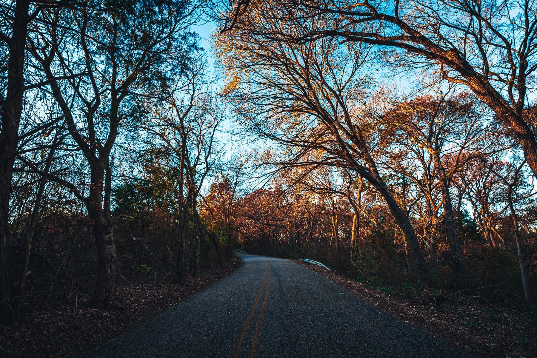 Trees along a country road near McKinney, Texas.