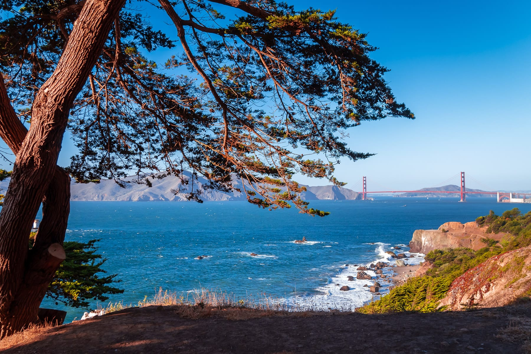 A tree at Lands End frames San Francisco's iconic Golden Gate Bridge.