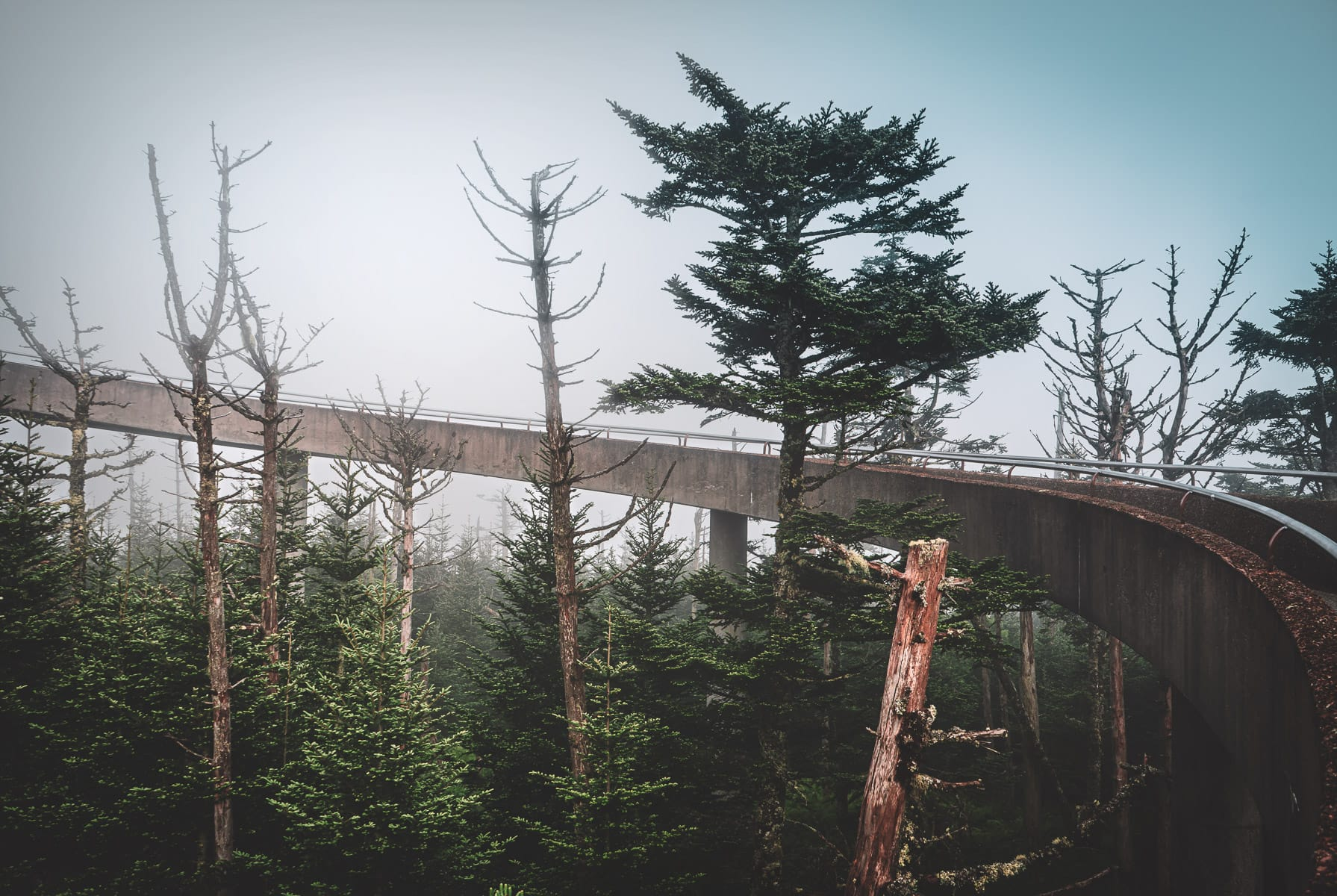 The ramp to the observation tower at Clingmans Dome curves through the early-morning Great Smoky Mountains National Park fog.