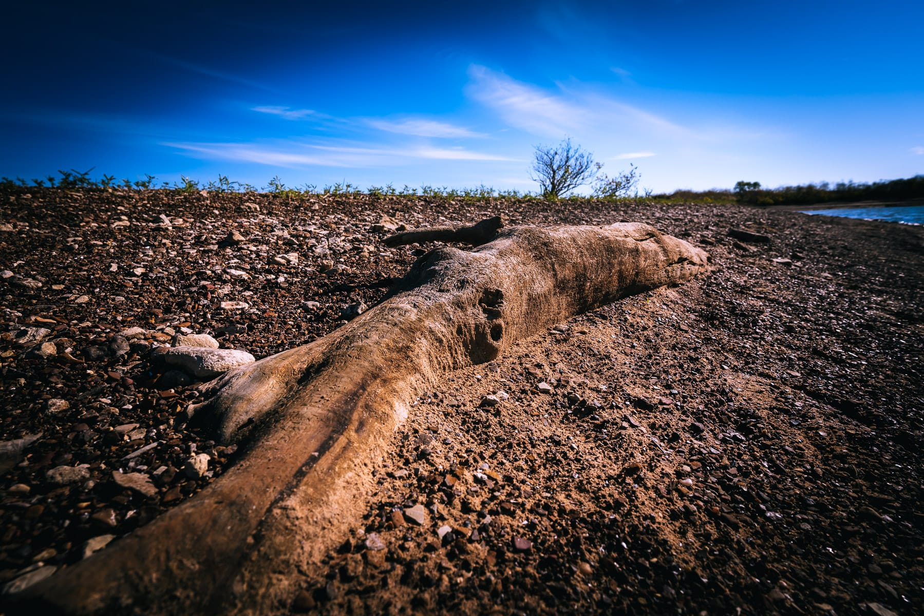 A partially-buried log on the shore at Oklahoma's Lake Texoma State Park.