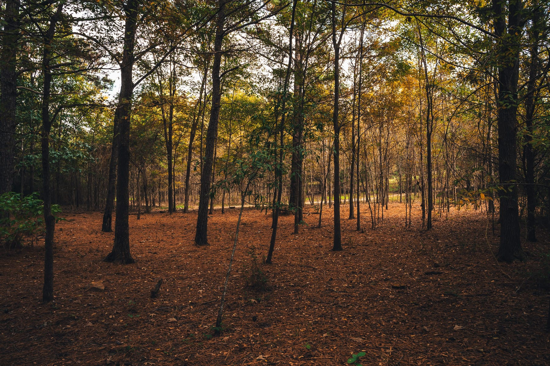 Among the trees at East Texas' Martin Creek Lake State Park.