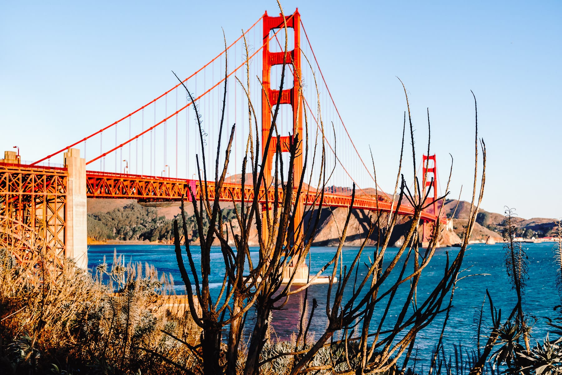 A tree obscures the Golden Gate Bridge, San Francisco.
