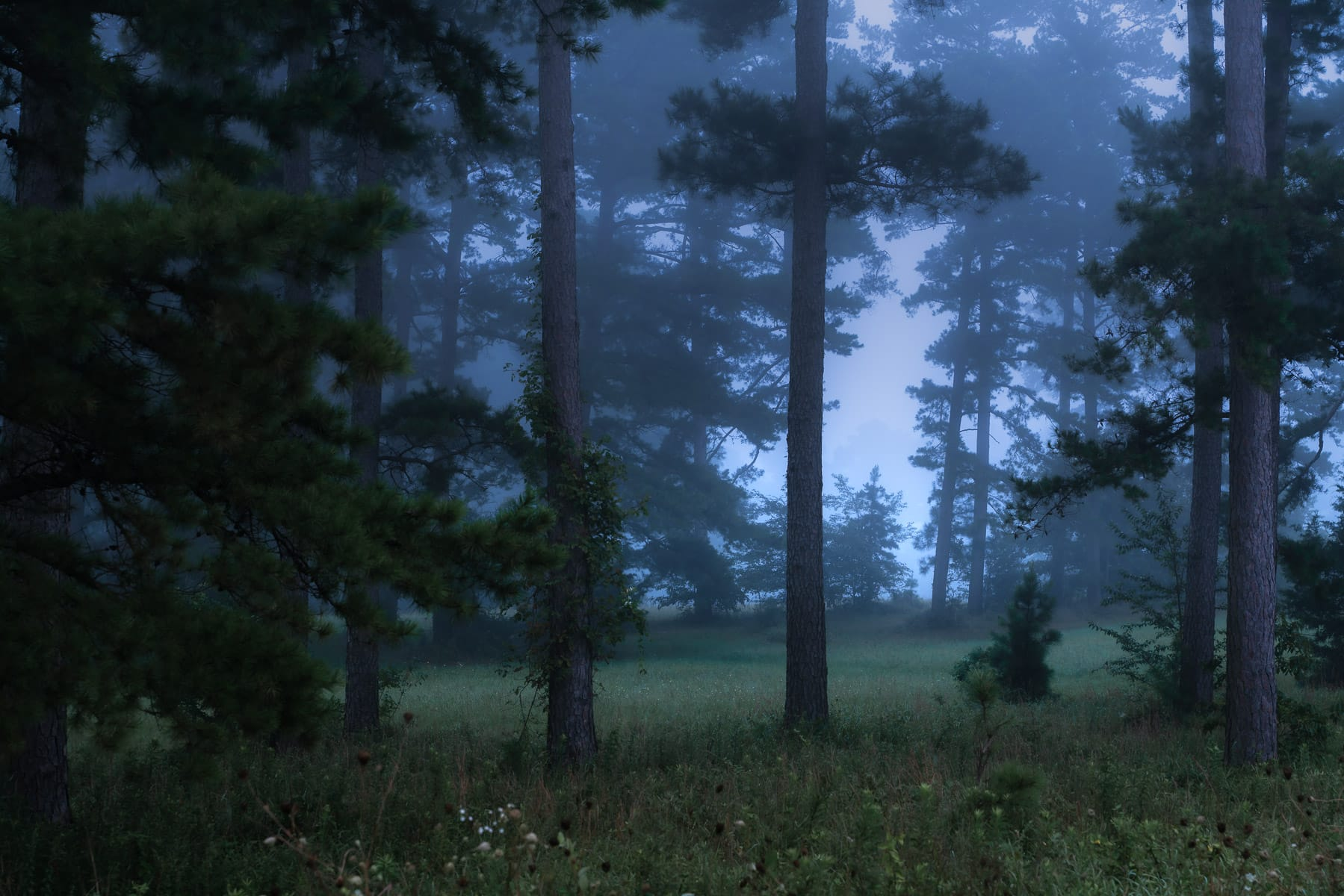 Morning fog in a forest near Mena, Arkansas.