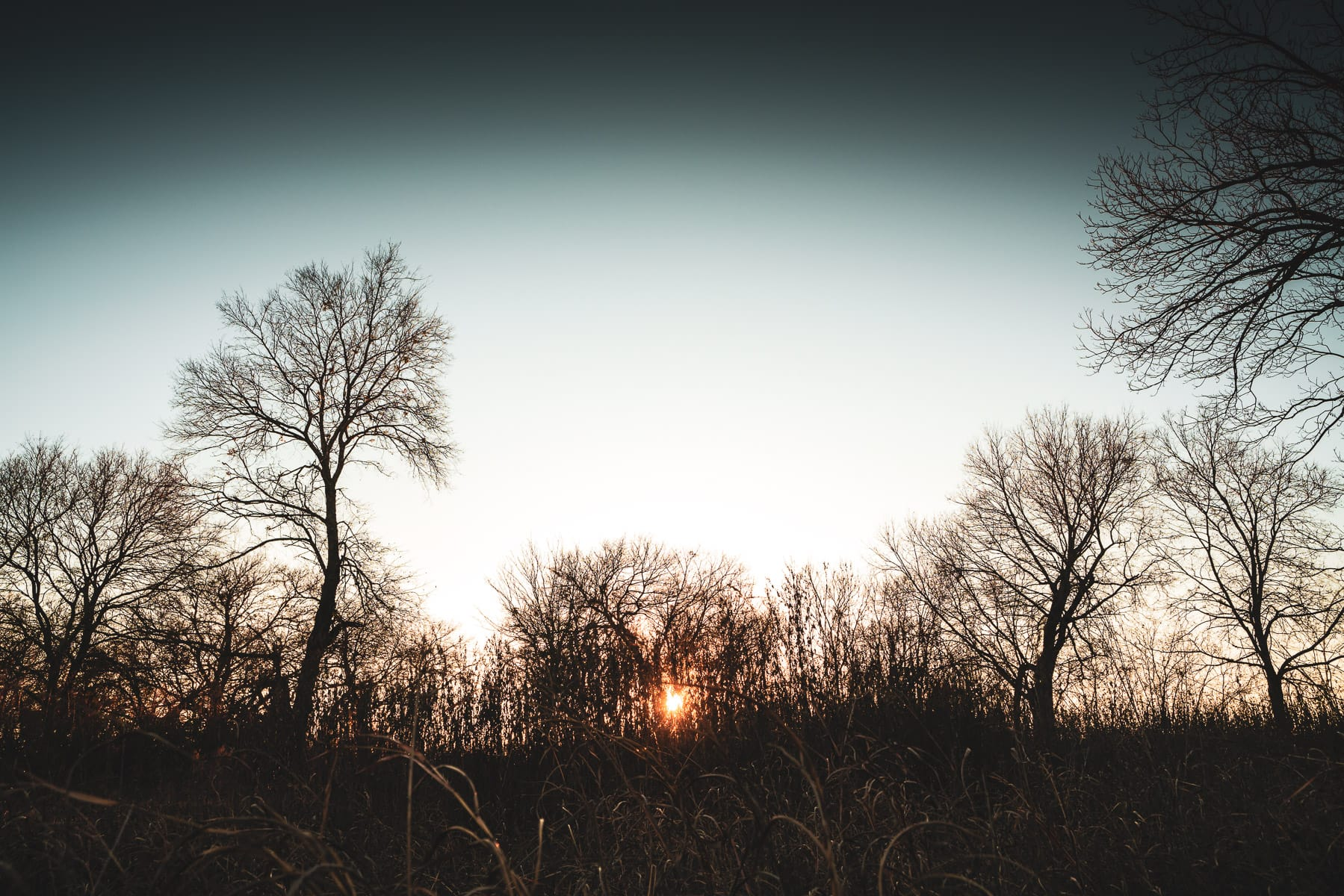 The sun sets on a grove of trees near McKinney, Texas.
