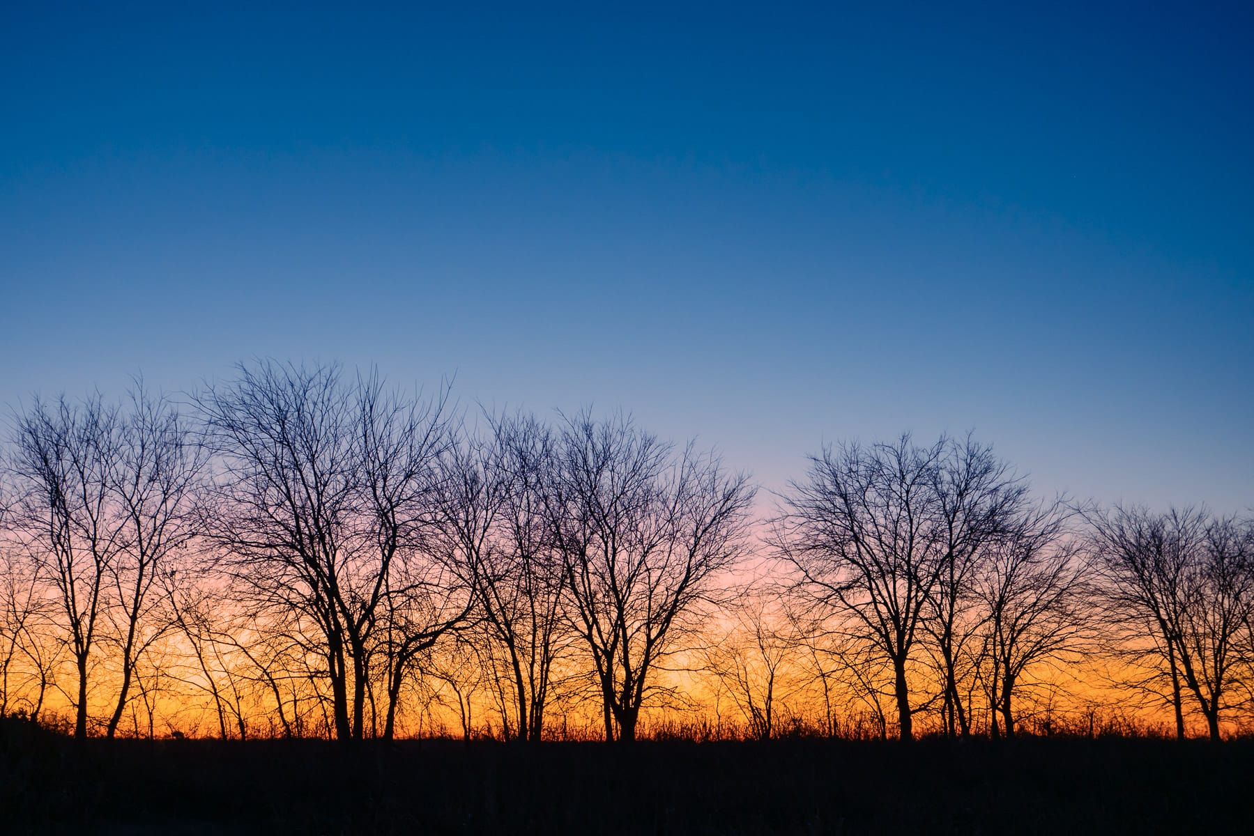 Trees are silhouetted by the sunrise at McKinney, Texas' Erwin Park.