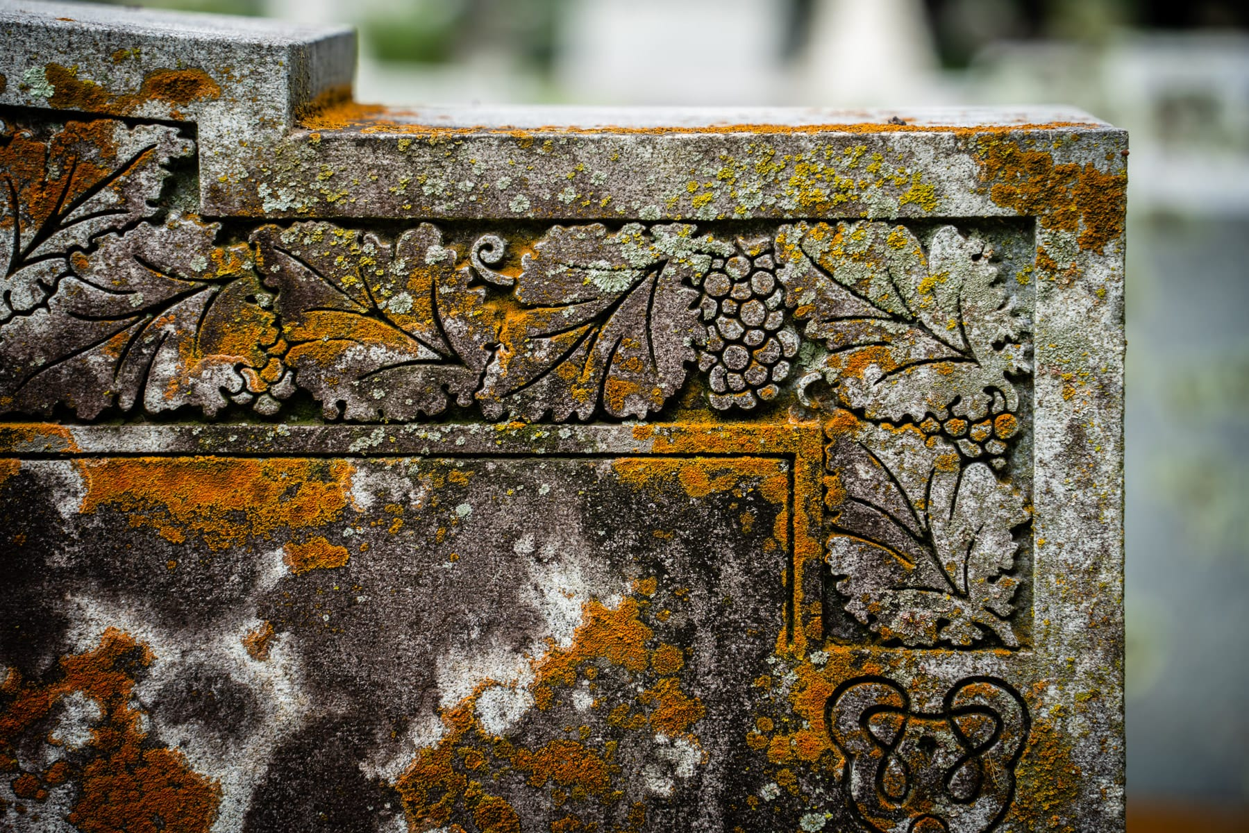 Lichens grow on a headstone at McKinney, Texas' Pecan Grove Cemetery.
