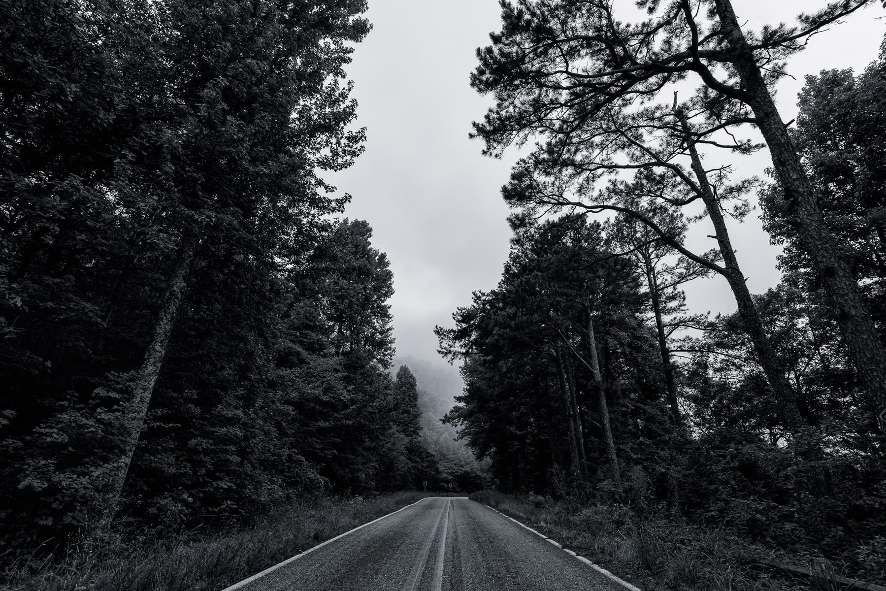 The tree-lined environs of the Talimena National Scenic Byway near Mena, Arkansas.