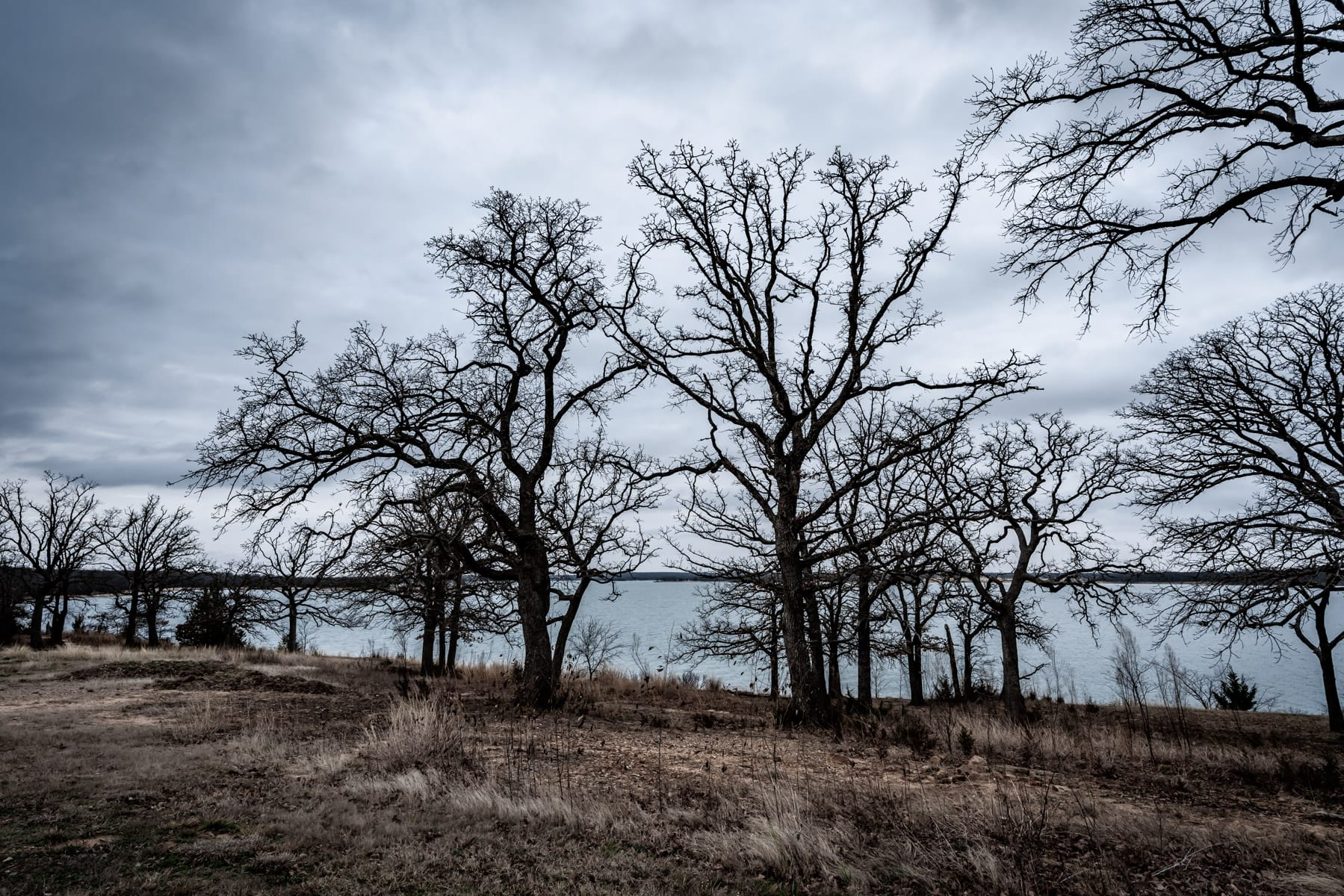 Leafless trees on the winter shore of Oklahoma's Lake Murray.