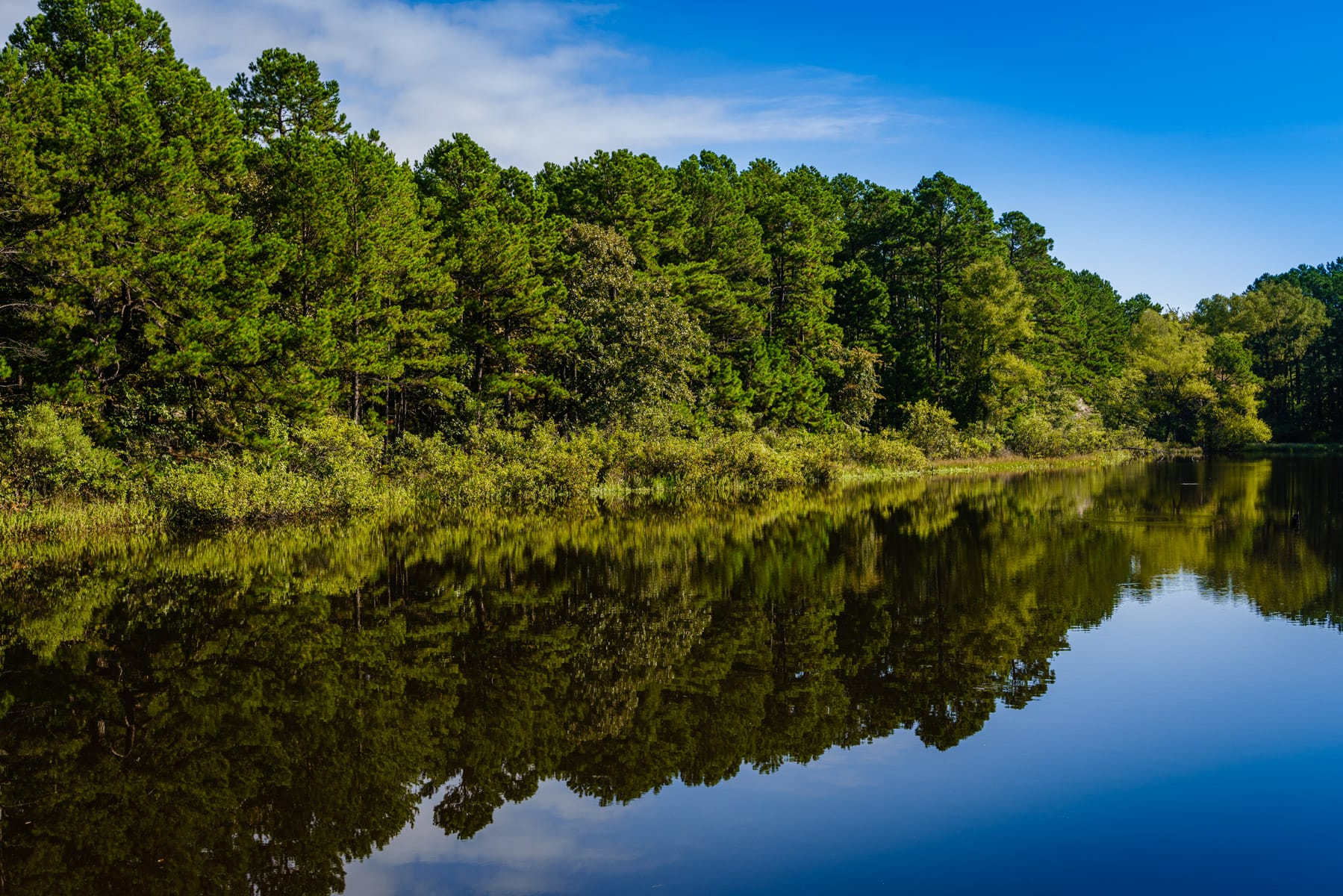 Trees reflected on a still pond at Oklahoma's McGee Creek State Park.