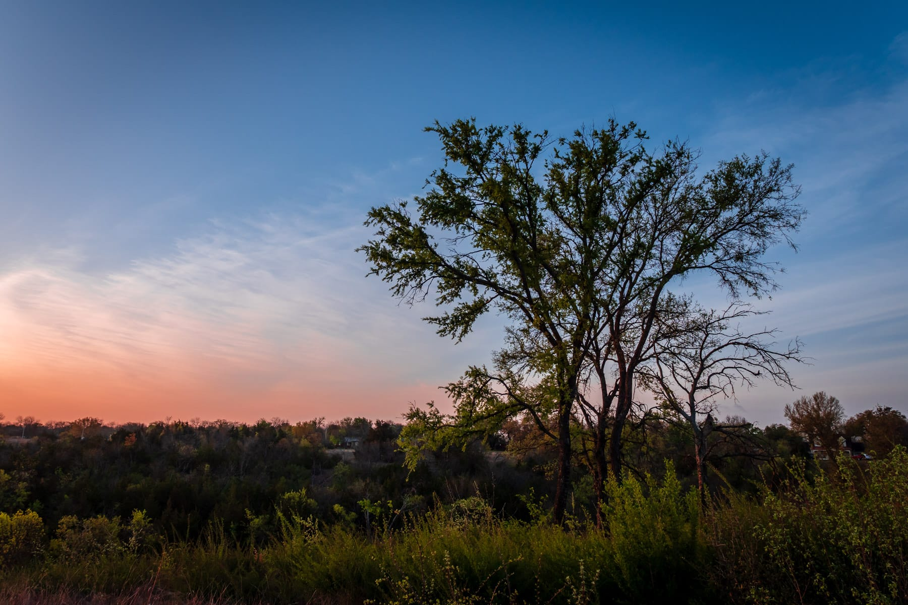 The first light of morning at Tandy Hills Natural Area, Fort Worth, Texas.