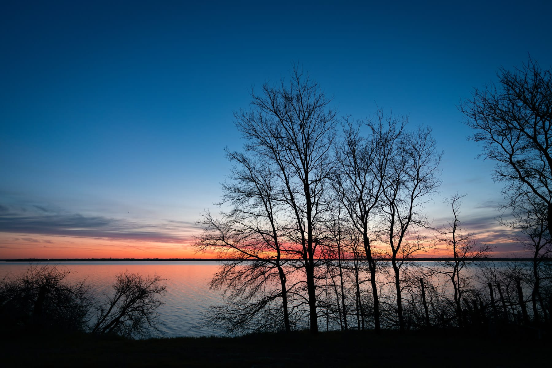 The sun rises on trees along the shore of North Texas' Lake Lavon.