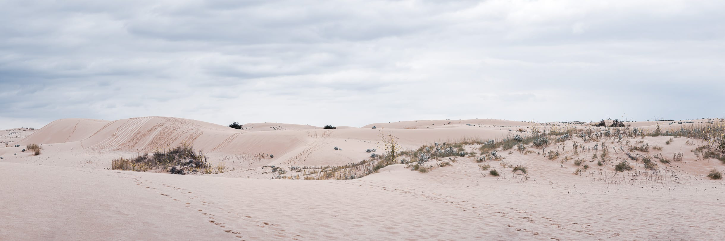 Sand dunes stretch into the distance at Texas' Monahans Sandhills State Park.
