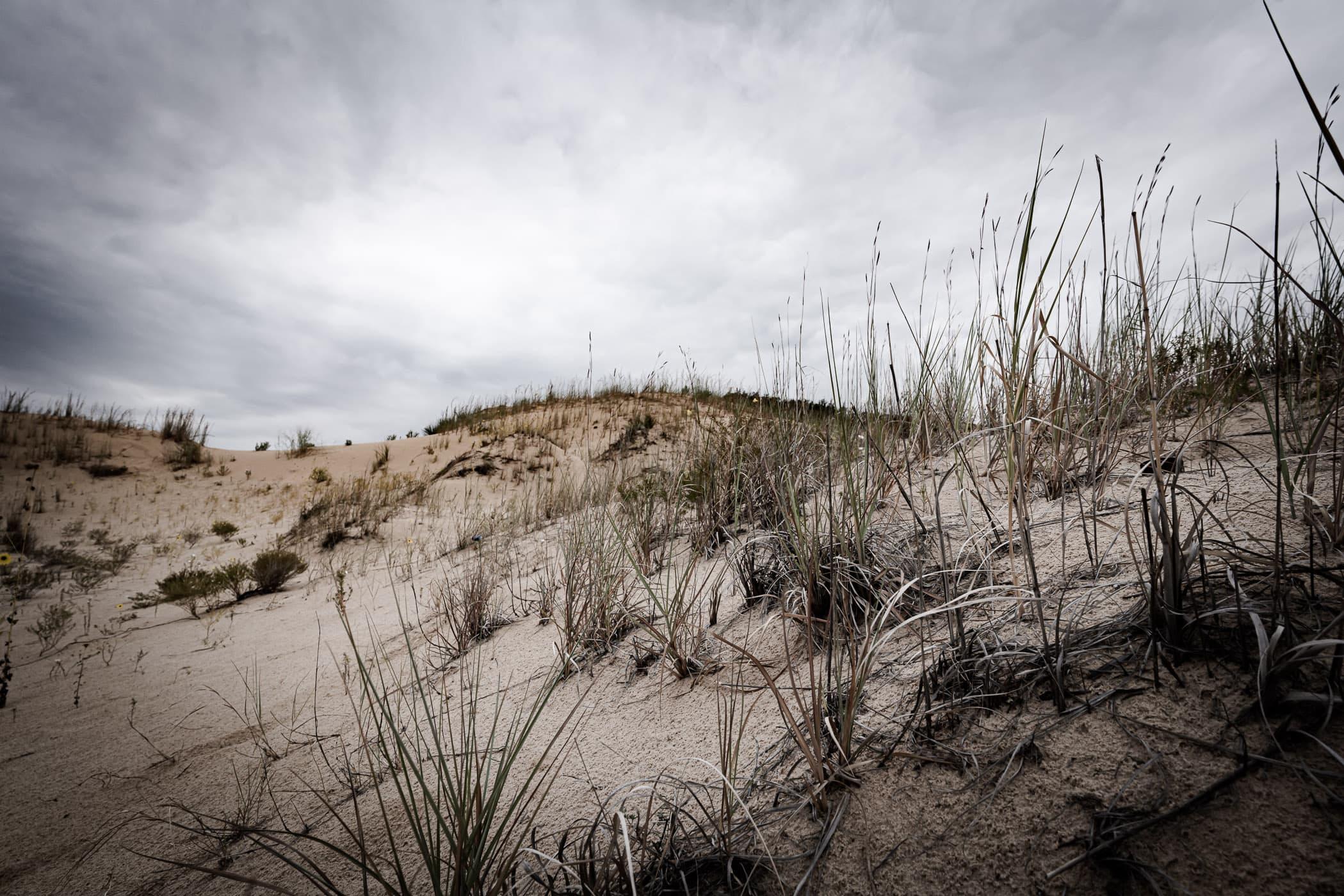 Desert plants grow amongst the dunes at West Texas' Monahans Sandhills State Park.